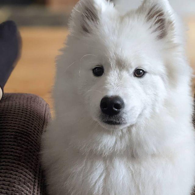 Picture of Luna